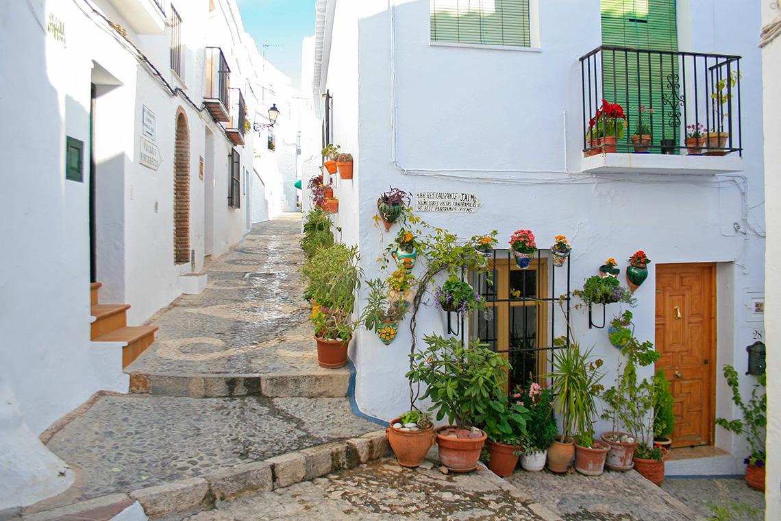 Plantas y flores Frigiliana - Andalucía Simple - Axarquía Costa del Sol